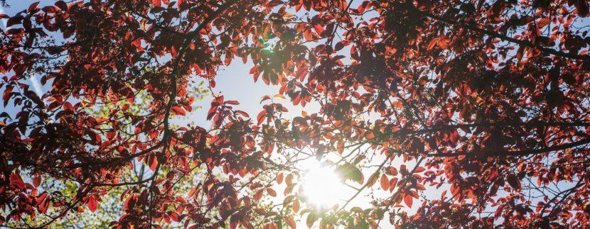 Immobilie der Woche: Bezugsfreie Eigentumswohnung im Herzen Tiergartens