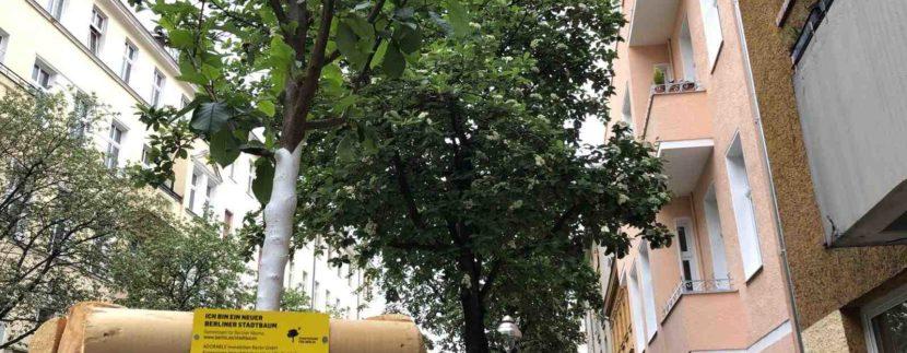 Adorable Immobilien spendet einen weiteren Stadtbaum